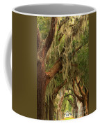 Plantation Oak Trees Coffee Mug