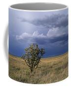 Plateau Cholla New Mexico Coffee Mug
