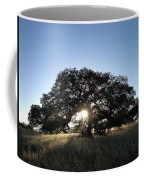 Plateau Oak Tree Coffee Mug
