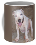 Playful Pitbull Puppy Haaweo Coffee Mug