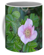 Pleasing Pink Coffee Mug