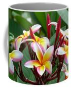 Plumaria  . . . . Coffee Mug