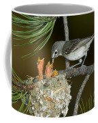 Plumbeous Vireo Feeding Chicks In Nest Coffee Mug