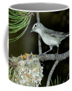 Plumbeous Vireo With Four Chicks In Nest Coffee Mug