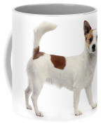 Podengo Portuguese Dog Coffee Mug