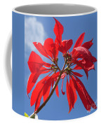 poinsettia from Madagascar Coffee Mug