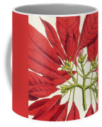 Poinsettia Pulcherrima Coffee Mug by WG Smith
