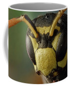 Polistes Dominula 41 Coffee Mug