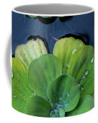 Pond Lettuce Coffee Mug
