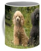 Poodle Dogs Coffee Mug