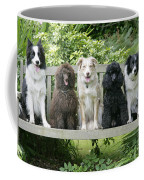 Poodles And Other Dogs On A Bench Coffee Mug