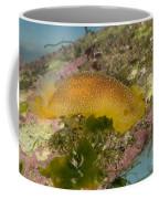 Porostome Nudibranch Coffee Mug