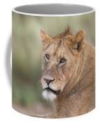 Portrait Of A Lioness, Panthera Leo Coffee Mug