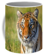 Portrait Of A Tiger Coffee Mug