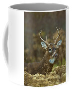 Portrait Of A White Tailed Buck Coffee Mug