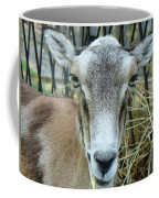 Portrait Of Mouflon Ewe Coffee Mug