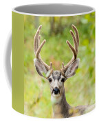 Portrait Of Mule Deer Buck With Velvet Antler  Coffee Mug