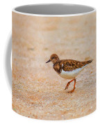 Portrait Of The Ruddy Turnstone Coffee Mug