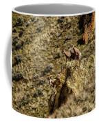 Posing Bighorn Sheep Coffee Mug