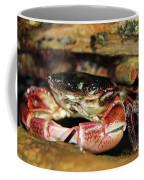 Posing Crab Coffee Mug