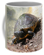 Possible Cooter Turtle Coffee Mug