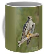 Praire Falcon On Dead Branch Coffee Mug