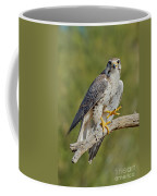 Prairie Falcon Coffee Mug