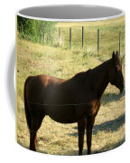 Prarie Stallion In The Shade Coffee Mug by Barbara Griffin