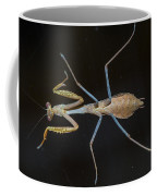 Praying Mantis 4 Coffee Mug