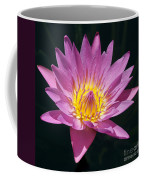 Pretty In Pink And Yellow Water Lily Coffee Mug