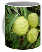 Prickly Balloon Plant Coffee Mug