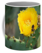 Cedar Park Texas Prickly Pear Cactus In Flower Coffee Mug