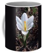 Pristine White Crocus Coffee Mug