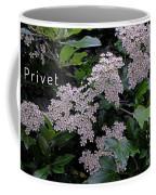 Privet Blossoms 2 Coffee Mug