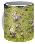 Pronghorn Antelope In Lamar Valley Coffee Mug