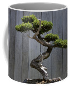 Prostrate Juniper Bonsai Tree Coffee Mug