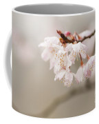 Prunus Hirtipes Coffee Mug