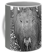 Przewalski's Horse Coffee Mug