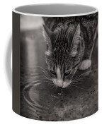 Puddle Drinking Kitty Coffee Mug