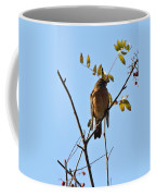 Puffed Breasted Robin Coffee Mug