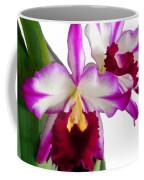 Purple And White Cattleyas Against White Space Coffee Mug