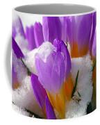 Purple Crocuses In The Snow Coffee Mug