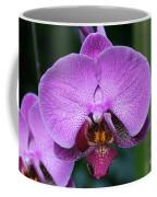 Purple Phalaenopsis Orchids Coffee Mug