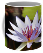 Purple Rhonda Kay Waterlily Above The Pond Coffee Mug