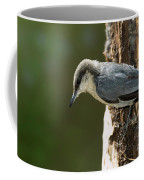 Pygmy Nuthatch Coffee Mug