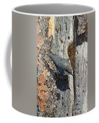 Pygmy Nuthatch At Nest Coffee Mug