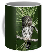 Pygmy Owl Coffee Mug