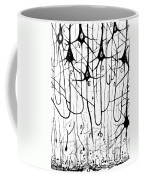 Pyramidal Cells Illustrated By Cajal Coffee Mug
