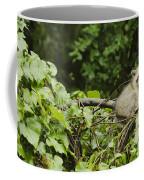 Raccoon Out On A Limb Coffee Mug