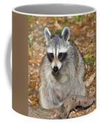 Raccoon Procyon Lotor Adult Foraging Coffee Mug